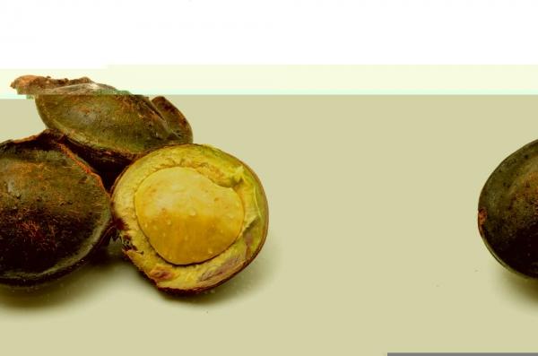 berani-cicipi-5-makanan-favorit-indonesia-ini-2.jpg